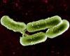 Лактобактерии: сущность и разновидности