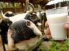 На Алтае с реализации снято 12 партий молочной продукции