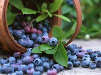 Выбираем полезные фрукты и ягоды для вкусных рецептов!